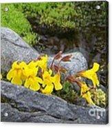 Mountain Monkey Flower Acrylic Print