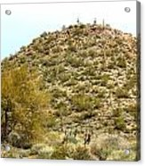 Mountain Of Cactus Acrylic Print