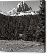 Mountain Peak Above The Tree Line Acrylic Print