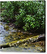 Mountain Stream And Rhododendron Acrylic Print