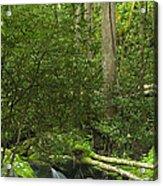 Mountain Stream Panorama Acrylic Print by Andrew Soundarajan