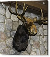 Mounted Moose Acrylic Print