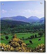 Mourne Mountains, Co Down, Ireland Acrylic Print