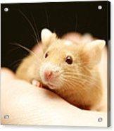 Mouse Acrylic Print