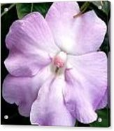 Moveonart Littleflowerforyou Acrylic Print