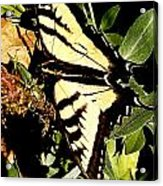Moveonart Yellowbutterflyfriend Acrylic Print