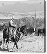 Moving The Herd-2 Acrylic Print