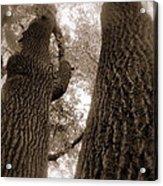Mr And Mrs Oak Land Acrylic Print