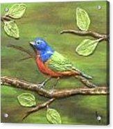 Mr. Bundting Acrylic Print