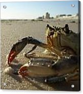 Mr. Crabs Acrylic Print