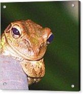 Mr. Toad Acrylic Print