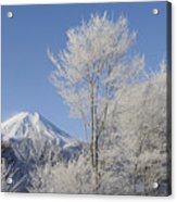 Mt Fuji And Frost-covered Trees Acrylic Print