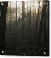 Mt. Hood National Forest Near Larch Acrylic Print