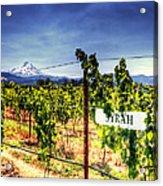 Mt Hood Winery Acrylic Print by Vicki Jauron