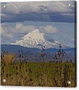 Mt Mclaughlin Springtime Acrylic Print