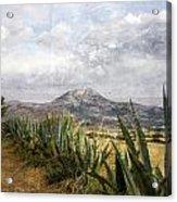 Mt Zeus Acrylic Print