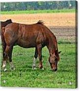 Mucnching Sweet Spring Grass I Photoart Acrylic Print