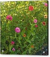 Multi-colored Flowers Acrylic Print
