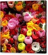 Multicolor Acrylic Print