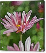 Mum Is In The Pink Digital Painting Acrylic Print