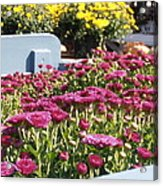 Mums At The Farm Stand Acrylic Print