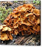 Mushroom Flower Acrylic Print