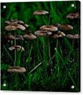 Mushroom Forest Acrylic Print