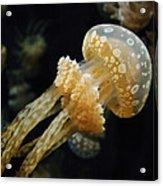 Mushroom Jellyfish Acrylic Print