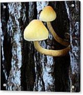 Mushrooms 3 Acrylic Print