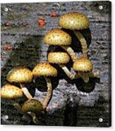 Mushrooms In Relief  Acrylic Print
