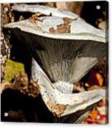 Mushrooms In The Autumn Woods Acrylic Print by Wilma  Birdwell