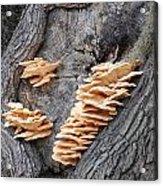 Mushrooms On A Tree Acrylic Print
