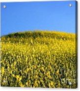 Mustard Grass Acrylic Print