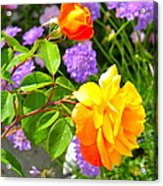 My Beautiful Roses Acrylic Print