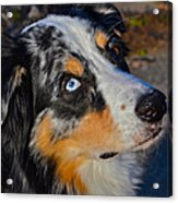 My Brown Eyes Blue Acrylic Print