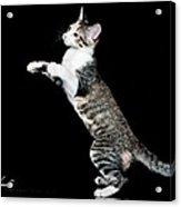 My Bunny Hop Dance Acrylic Print