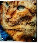 My Favorite Feline Acrylic Print
