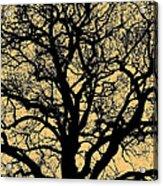 My Friend - The Tree ... Acrylic Print