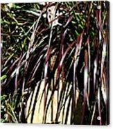 My Musical Garden Acrylic Print