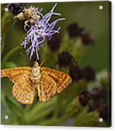 My National Geographic Moment Acrylic Print