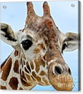 My New Best Friend Acrylic Print