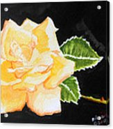 My Yellow Rose Acrylic Print