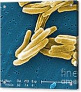 Mycobacterium Tuberculosis, Sem Acrylic Print
