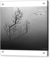 Myst-eerie-us Acrylic Print