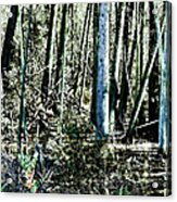 Mystery Forest Acrylic Print by Olivier Le Queinec
