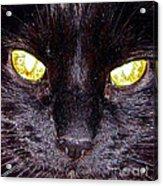 Mystic Eyes Acrylic Print