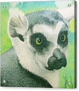 Mystic Seer Of Madagascar Acrylic Print
