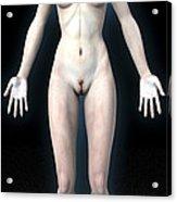 Naked Woman Acrylic Print