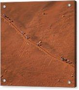 Namibia Dune Hoppers Acrylic Print