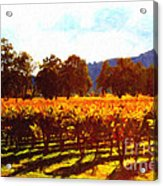 Napa Valley Vineyard In Autumn Colors 2 Acrylic Print by Wingsdomain Art and Photography